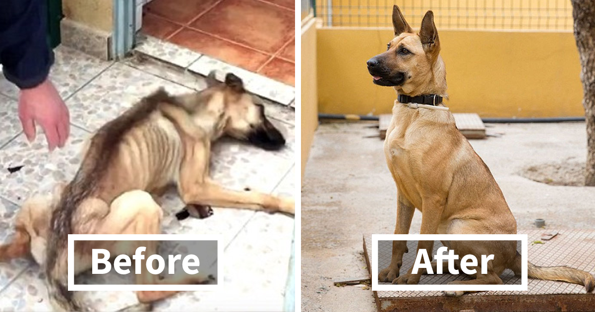 rescue-dogs-before-after-adoption-FB3.png