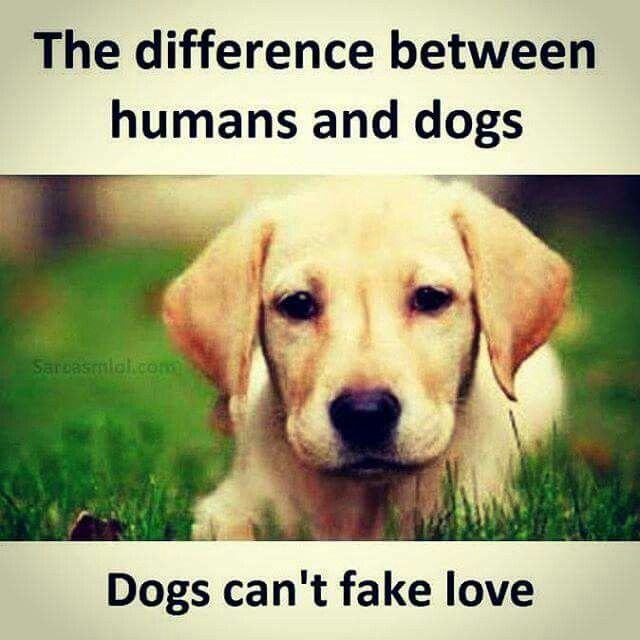 45f3872152c01d92d1eecc5c0d693d81--dog-quotes-animals.jpg